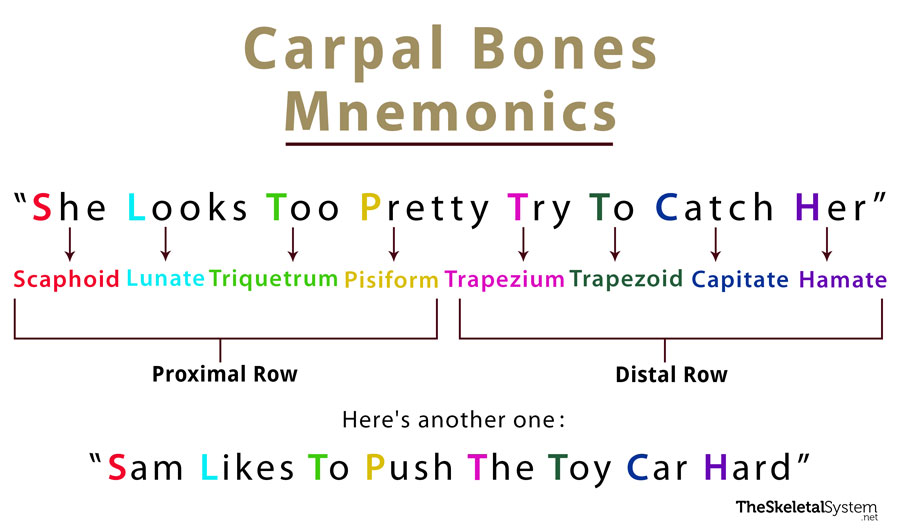 What are some creative mnemonics for wrist bones? - Quora
